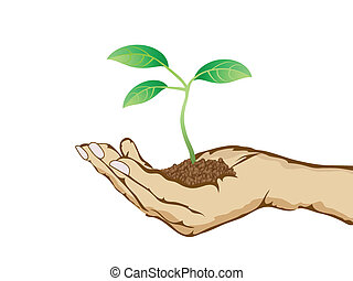 isolated green plant growing in hand from white background
