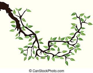 green spring tree