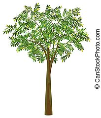 isolated green tree on white background vector design