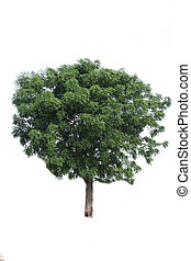 Isolated green tree over white background