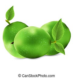 Isolated green walnut