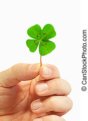 four leaf clover - Isolated hand with green four leaf clover