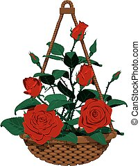 Isolated hanging basket of many ros