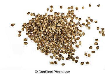 hemp seed -  isolated hemp seed on whiter background