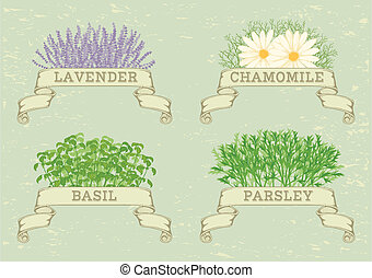 isolated herbs, lavender, chamomile, chives, parsley, dill, and basil, herbal vintage background