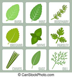 Isolated herbs vector icons set