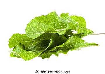 isolated horseradish leaves - isolated on white background ...