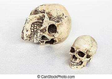 Isolated human skull on white
