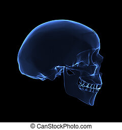 x ray skull - Isolated human x ray skull on black background...