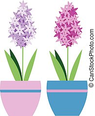 Isolated hyacinth plant in flower pot. Vector illustration