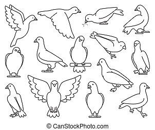 .isolated, illustration, contour, ensemble, pigeon, icône, vecteur, colombe, oiseau, arrière-plan., pigeon., paix, blanc