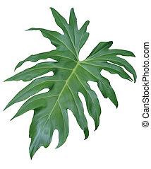 Isolated Jungle Leaf