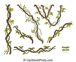 Isolated jungle plants set. Design elements. Liana branch. Tropical forest trees in cartoon style. Rainforest bush on white background