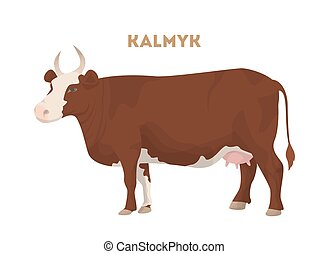 Isolated kalmyk cattle.
