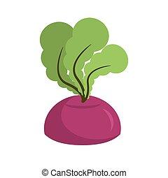 isolated., légumes, betterave, fond, croissant, frais, blanc