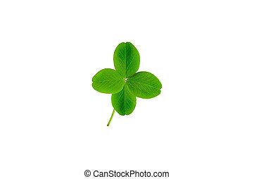 clover with four petals