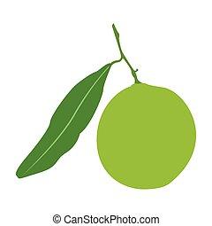 Isolated lemon fruit - Isolated lemon on a white background...