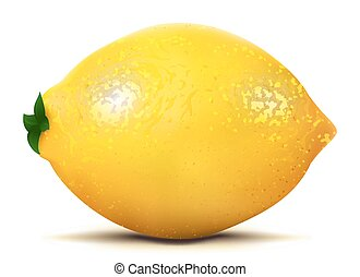Isolated lemon fruit, vector art illustration product.