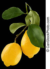 Isolated lemon. Whole two fresh lemon isolated on white background with clipping path