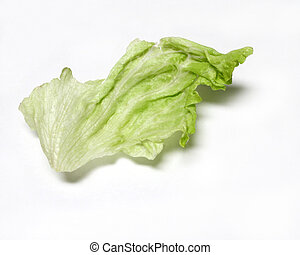 Isolated lettuce leaf on white