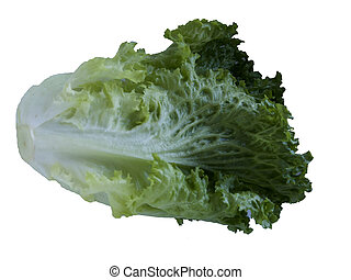 Isolated Lettuce on white background
