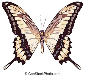 Isolated Light Butterfly Vector Illustration
