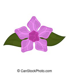 Isolated lilac flower