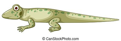 Isolated lizzard on white background