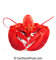 isolated lobster - lobster isolated on white background