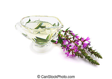 Isolated Lythrum Salicaria (Purple Loosestrife) Medicinal...