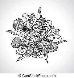 isolated., macro, flor, pretas, orquídea