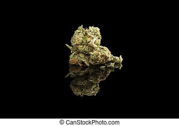 isolated., marijuana, broto