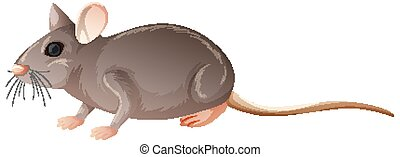 Isolated mouse on white background