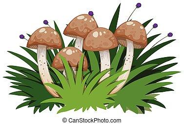 Isolated mushroom on white background