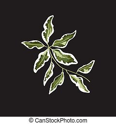 isolated object of a branch of green leaves, in the style of watercolor. vector