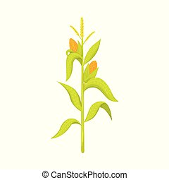 Isolated object of corn and stalk logo. Set of corn and field stock vector illustration.