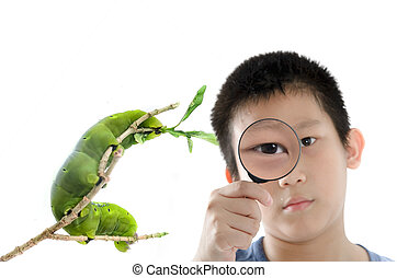 isolated of green worm are clamber on branch with boy and magnifying glass