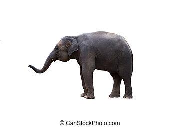 Thailand elephant on white background