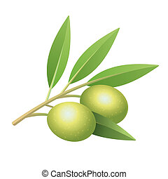 Isolated olive's branch with leaves and two fruits