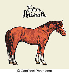 Isolated one brown horse