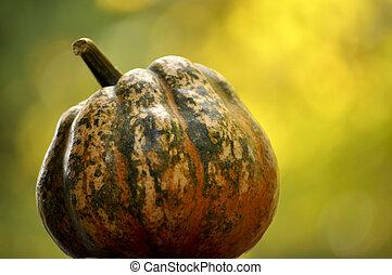orange, green and white gourd