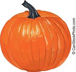 Isolated orange pumpkin.