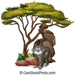 Isolated picture of baboon under the tree