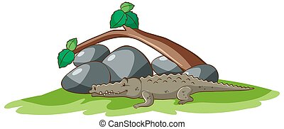 Isolated picture of crocodile in garden