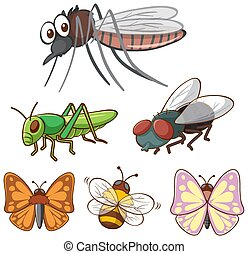 Isolated picture of different insects
