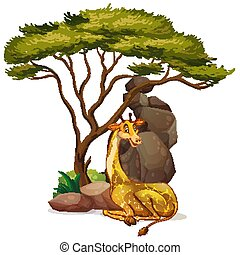 Isolated picture of giraffe under the tree