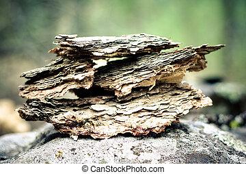 piece of bark