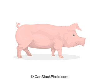 Isolated pig illustration.