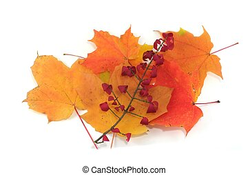 Isolated pile of autumn leaves