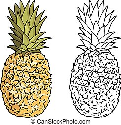 Isolated pineapples